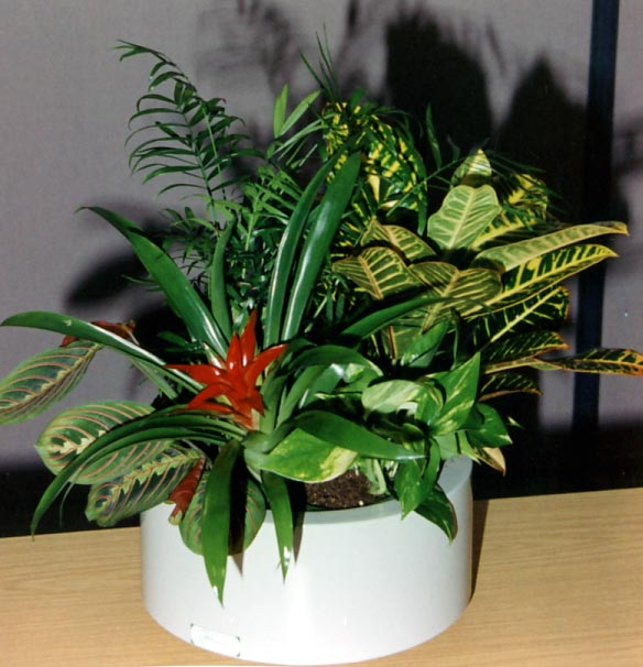 office plant displays. Boardroom / Meeting Rooms Office Plant Displays
