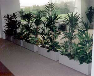 office plant displays. Safety Can Also Be Provided By Plant Displays Such As Shielding Customers From Hitting Their Heads On Sharp Protrusions For Example A Spiral Staircase. Office